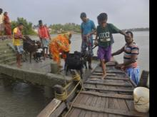 Villagers along with their cattle ride on a boat to move toward a safer place after the cyclone Yaas,  in Gosaba village in  Sundarban on Thursday.